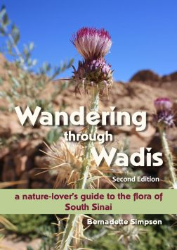 Wandering through Wadis 2nd Edition COVER