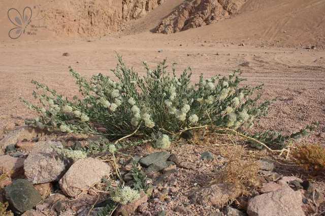 near-wadi-gnai_22