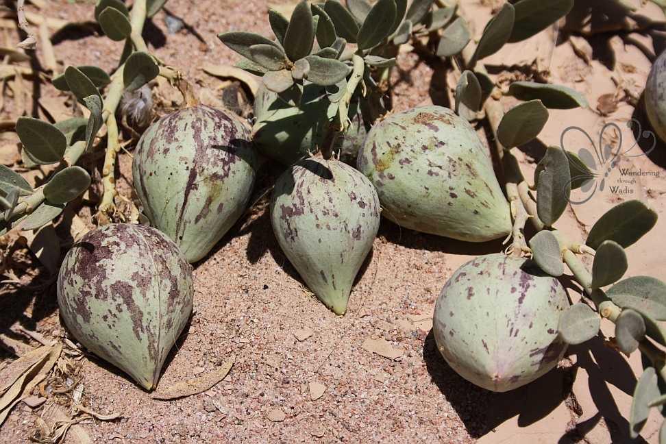 wadi-dahab-6