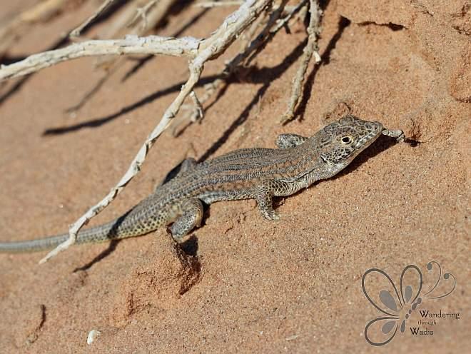 Bosc Lizard_Najaeen (3)